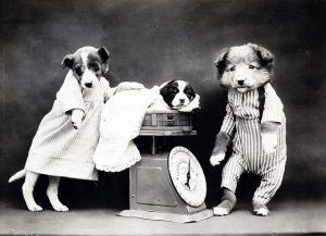 hond weegschaal jaarlijkse gezondheidscontrole